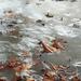 A jég fogságában