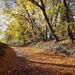 Séta az őszben