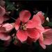 Virágba borult