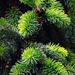 Üde-zöld