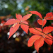 Pirosló ősz