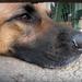 Kutya 3.