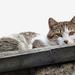 Macskaágy 3.