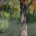 Őszi akvarell