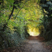 Őszi alagút