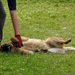 Kutya nagy öröm