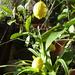 Album - 2012.növények, virágok