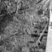 Ponton híd4