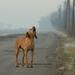 reggeli kutyaugatás