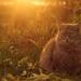 Album - macskák