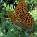 Barátságos pillangó♥