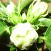 növények 036