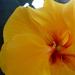 növények 001