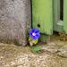 A beton, a fa, a vas és a virág