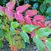 Őszi színek 1632