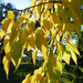Őszi színek 1663