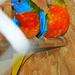 Papagájaim 3864