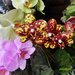 Orchideáim 8808