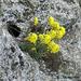 Hegyek virágai 8913