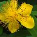 Virág 0799