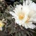 Kaktusz 1408