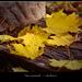 ősz-színek 2