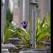 temetői hangulat