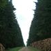 Őrség Bakonya erdő