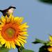 Gyűjtemény - Virágzó mezőgazdaság