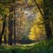 Arany Erdő