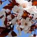 Tavaszi fényBB