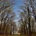 Karádi erdőben