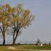 A két fa