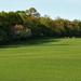 Zöld mezőben
