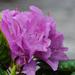 Ismeretlen virág
