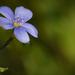 Kicsi kék