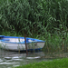Csónak a nádasban