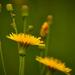 Csak egy kis virág BBBB
