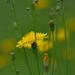 Bimbók között