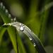 Eső utánBBBB
