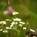 Néhány szál virág