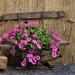 Virágok virága