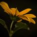Egy szál virág