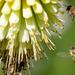 Méhek munkában