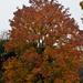 Az ősz szine
