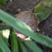 Csigaház szarvakkal