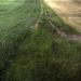 Fields with Stone Wall
