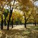 Ősz (Városliget)