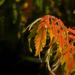 narancsos helyett➜ ➜ ➜ ..lassan már piroslik!!!!! :-)