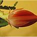 Album - Kaktusz viraga
